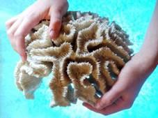 koraal in handen